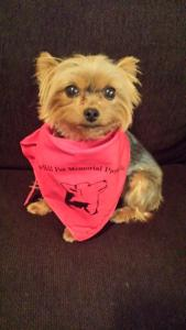 YapTalk's Bella, showing her support for our friends at CHPMP Inc.